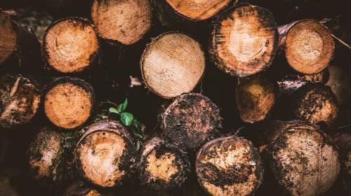 consultoría forestal ekotonia consultores